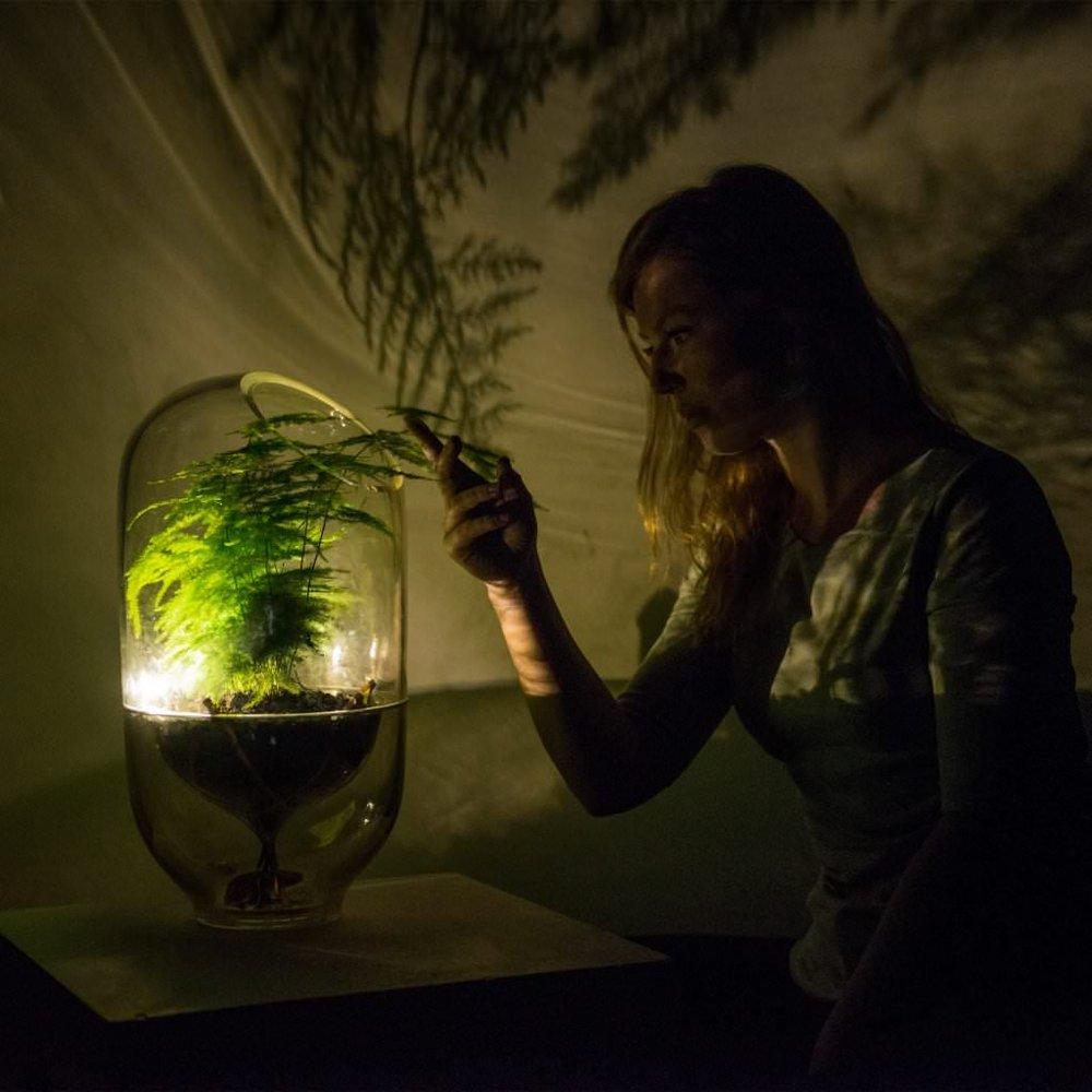 Living Light: la pianta che si illumina